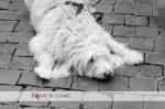 2016_02_23 Hund