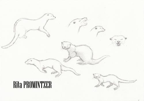 2016_05_31 Fischotter Skizzen
